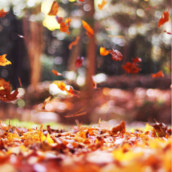 Fallen leaves [LG Home+]